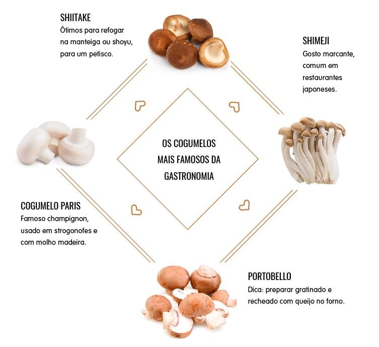 infográfico cogumelos zona sul