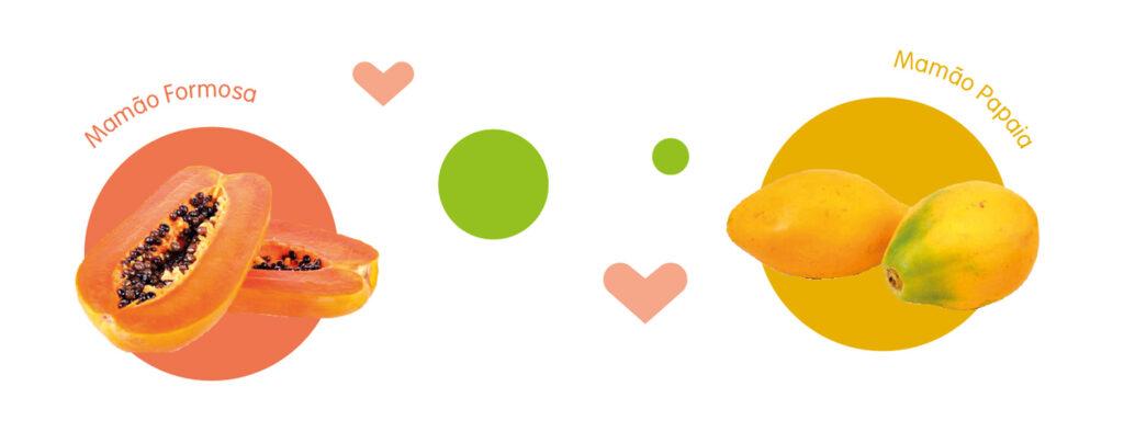 mamão formosa e mamão papaia